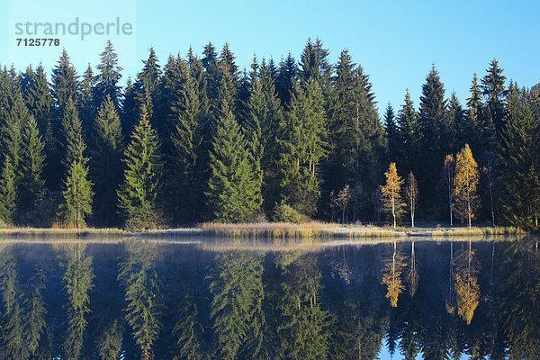 Naturschutzgebiet,Wasser,Morgen,Baum,Schutz,Spiegelung,Wald,See,Natur,Nebel,Holz,blau,Birke,Fichte,Tanne,Moor,Schweiz,Nebelfelder