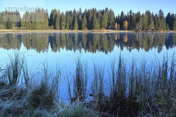 Naturschutzgebiet,Wasser,Morgen,Baum,Schutz,Spiegelung,Wald,See,Natur,Nebel,Holz,Birke,Fichte,Tanne,Moor,Schweiz,Nebelfelder