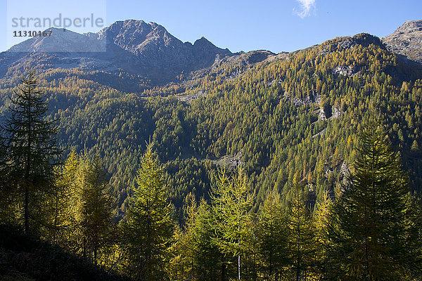 Berg,Bergwald,Europa,Fichten,Herbst,Jahreszeit