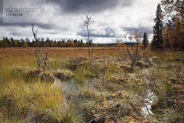 Europa,Feuchtgebiet,Finnland,Flachland,Herbst,Herbstfarben