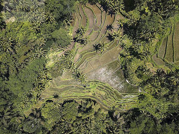 Ackerbau,Agrarland,am Tag,Anbaufläche,Asien,auf dem Land