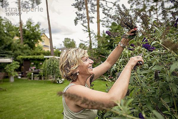 Glückliche Gartenarbeiterin beschneidet Schmetterlingsbusch