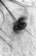 Ein enger Schuss ein Pferde-Auge mit Schneeflocken genommen in Alberta, Kanada.