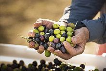 Europäer ,Mann ,handvoll ,Olive