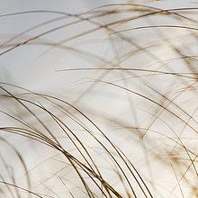 Seegräser auf der Halbinsel Long Beach an der Küste des Bundesstaates Washington.