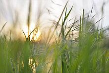 Sonnenaufgang,Gras,Bayern,Franken,Deutschland