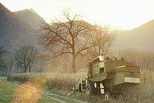 Mähdrescherernte auf dem Feld, Premosello, Verbania, Piemonte, Italien