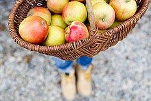Korb voller selbstgezogener Äpfel, hoher Winkel