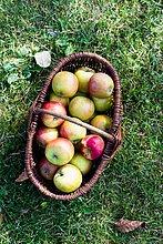 Frische hausgemachte Äpfel im Korb, hoher Winkel